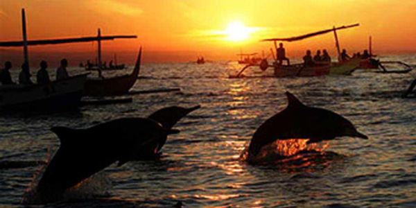 dolphin-watching-tour-in-lovina-bali